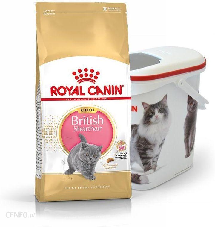 karma royal canin british shorthair kitten 10 kg pojemnik ceny i opinie. Black Bedroom Furniture Sets. Home Design Ideas