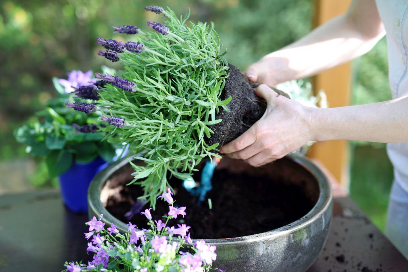 Przesadzanie Roślin Wszystko Co Musisz Wiedzieć Zanim