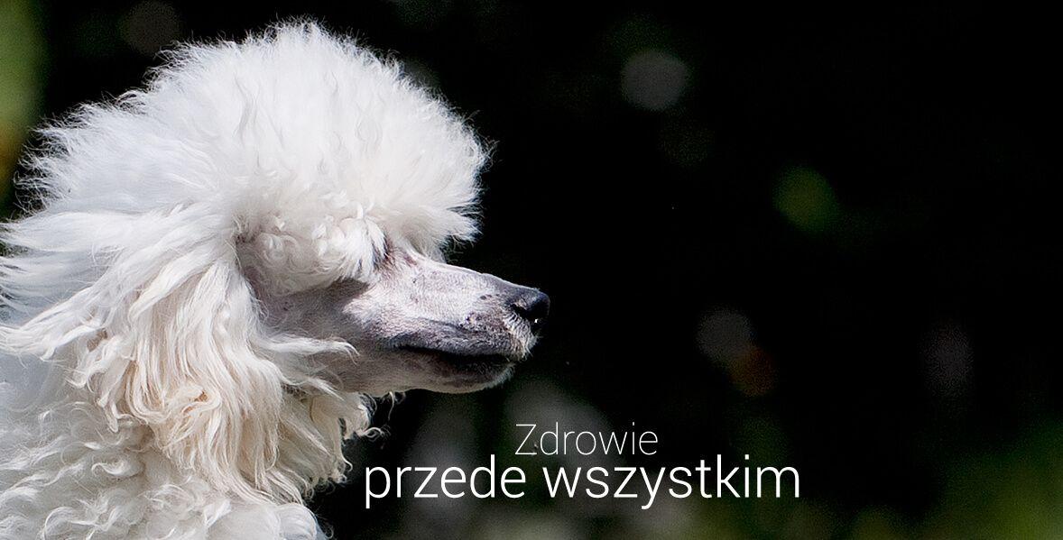 karma royal canin poodle adult 3x1 5kg ceny i opinie. Black Bedroom Furniture Sets. Home Design Ideas