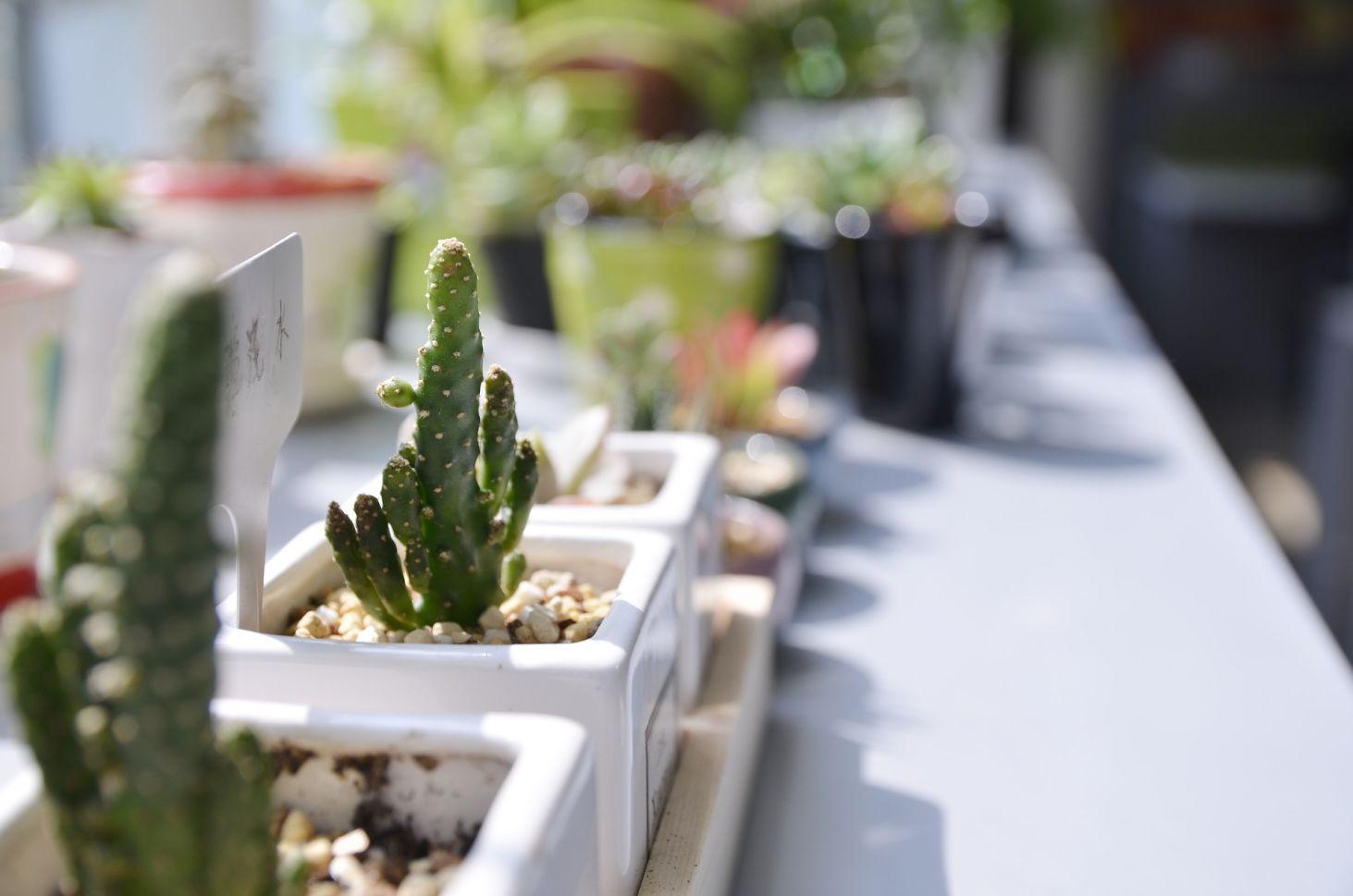 Rośliny Dla Początkujących Czyli 6 Kwiatów Domowych łatwych