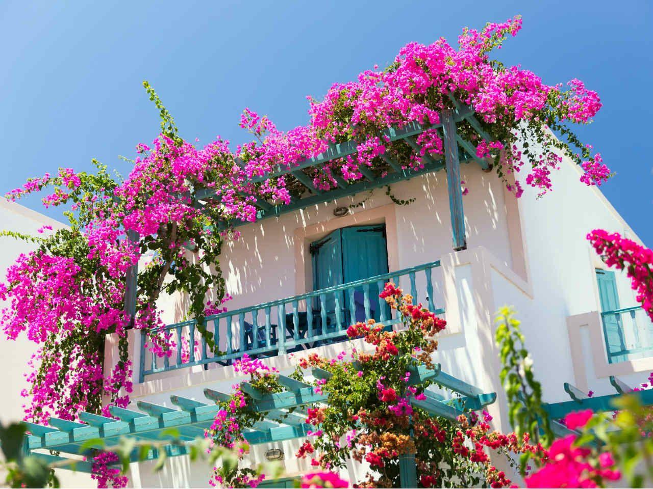 Najlepsze Kwiaty Zwisające Na Balkon Które Wybrać
