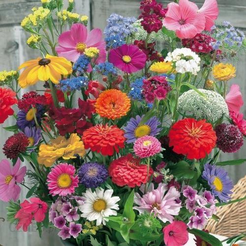 Kiepenkerl Kwiaty Ciete Mieszanka 102031 Ceny I Opinie Ceneo Pl