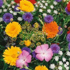 Kiepenkerl Kwiaty Polne Z Ziolami Laka Kwietna 102330 Ceny I Opinie Ceneo Pl