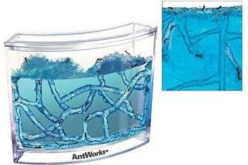 Akvariumas skruzdėms