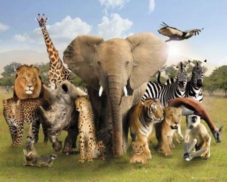 Zwierzęta Afryki - plakat - Opinie i atrakcyjne ceny na Ceneo.pl