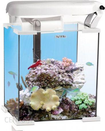 Aqua El Zestaw Akwariowy Nano Reef 30x30x35cm30l Ceny I Opinie