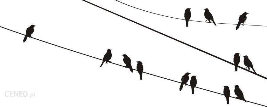 Naklejkolandiapl Ptaki Na Drutach 2 Opinie I Atrakcyjne Ceny Na