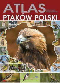 matura polski błąd kardynalny