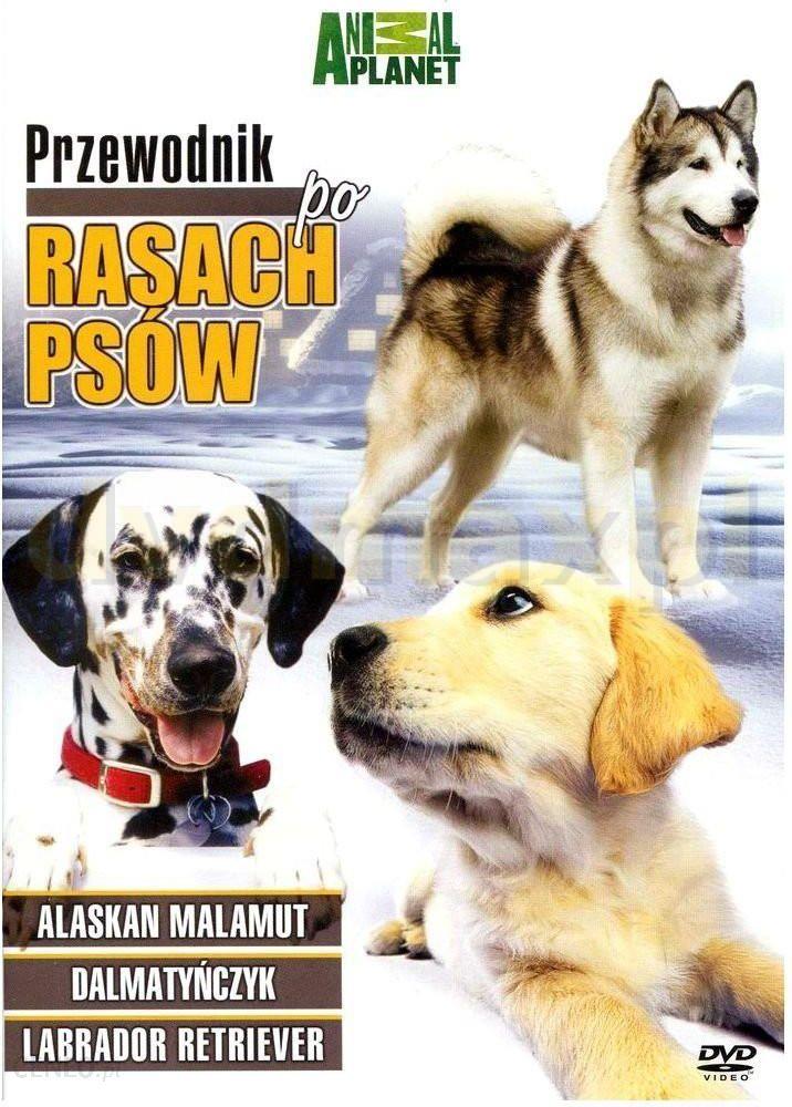 Film DVD Discovery Animal Planet: Przewodnik Po Rasach Psów 1 (DVD) - Ceny  i opinie - Ceneo pl