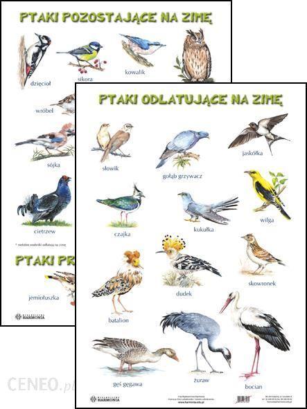 Ptaki Odlatujące Na Zimę Ptaki Pozostające Na Zimę Ptaki Przylatujące Na Zimę Plansze Edukacyjne