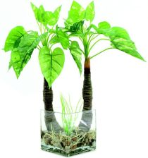 Pothos in glass, 50cm