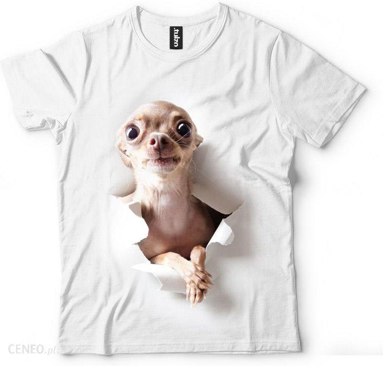 fa8be706638d Chihuahua - zdjęcie 1