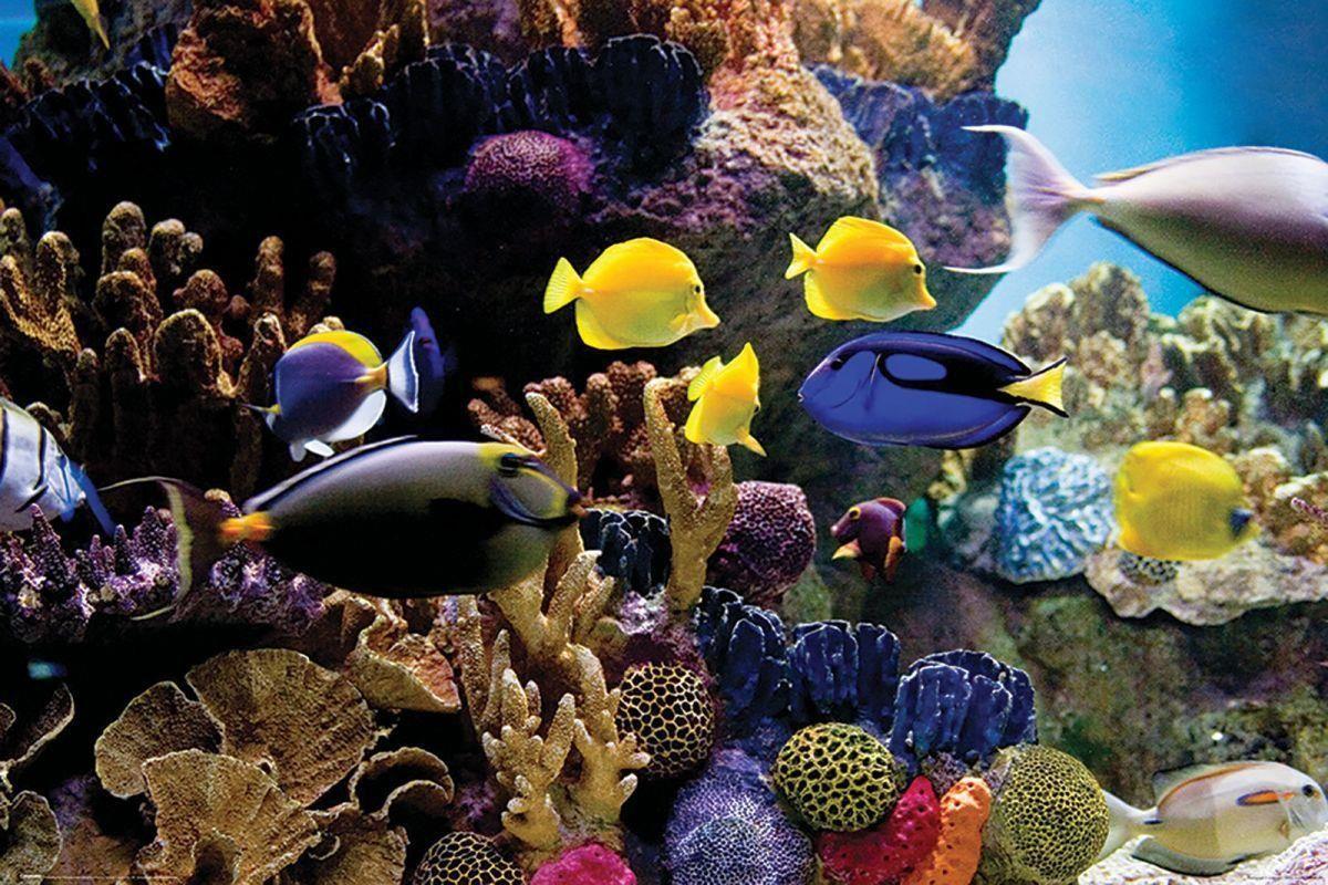 Rafa Koralowa Ryby I Korale Plakat