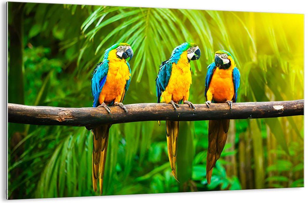 Obraz Na Szkle Papugi Na Gałęzi Gaa120x80 2696 Opinie I Atrakcyjne Ceny Na Ceneopl