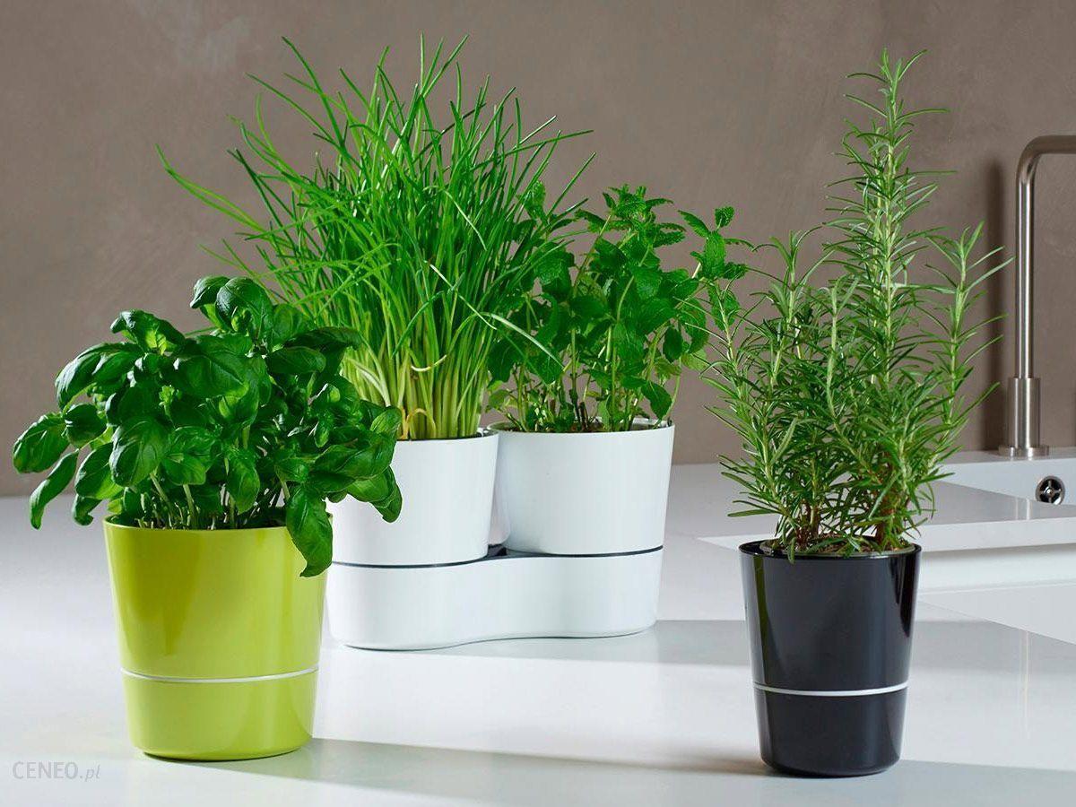 Rosti Mepal Doniczka Na Zioła Ceramiczna Herbs Podwójna Szara 22 Cm