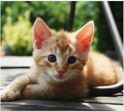 Rudy Kot Budowa I Remont Ceneopl
