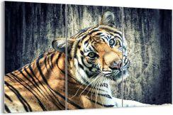 Koty Tygrysie Ceny I Opinie Ceneopl