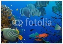 Decormint Plakat Premium Rafa Koralowa 42x29cm
