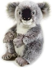 National Geographic Koala