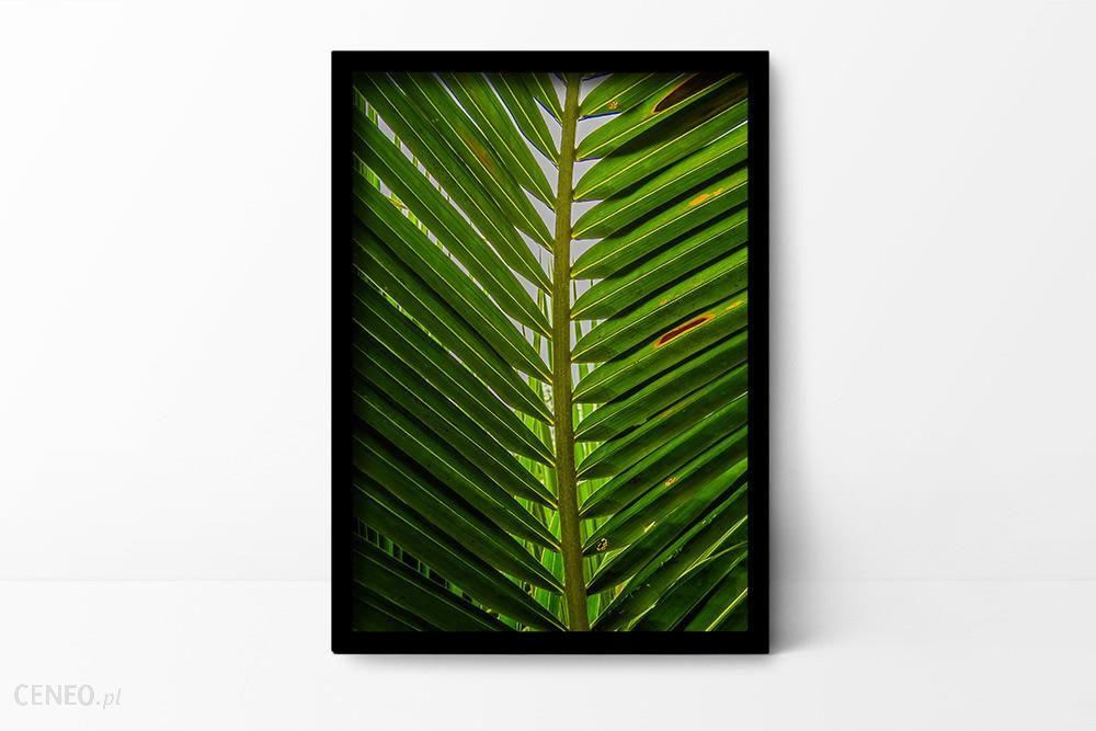 Plakaty I Spółka Plakat Botaniczny A4 Opinie I Atrakcyjne Ceny Na Ceneopl