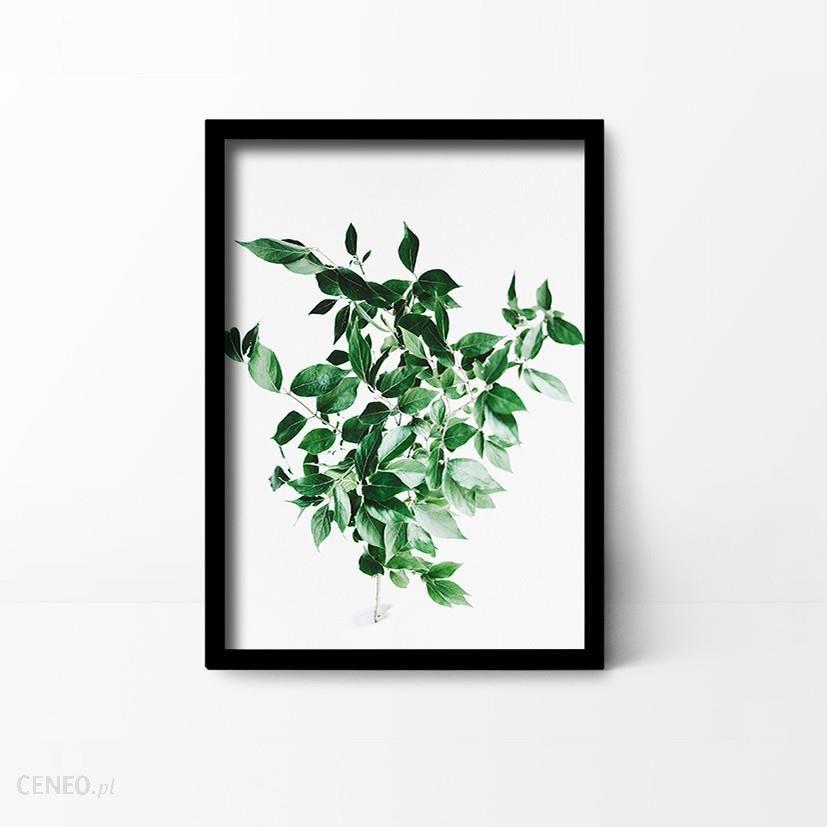 Plakaty I Spółka A3 Plakat Botaniczny Gałązka Opinie I Atrakcyjne Ceny Na Ceneopl