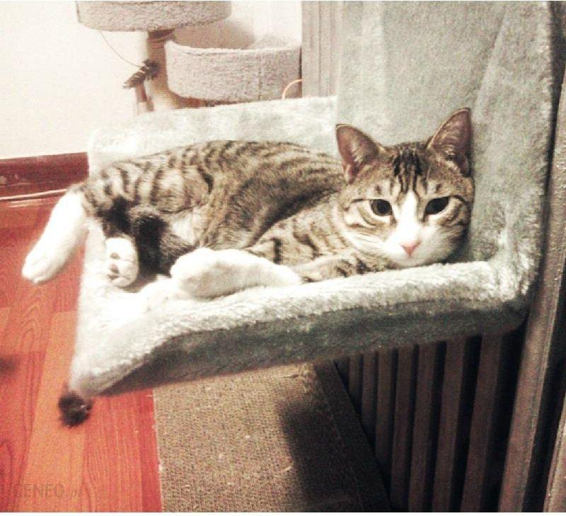 Aliexpress Wysokiej Jakości Kota Hamak Bed Poduszki Ciepłym łóżku Kot Nest Puppy Kot Bed śpiąca Hamak Legowisko Ceneopl
