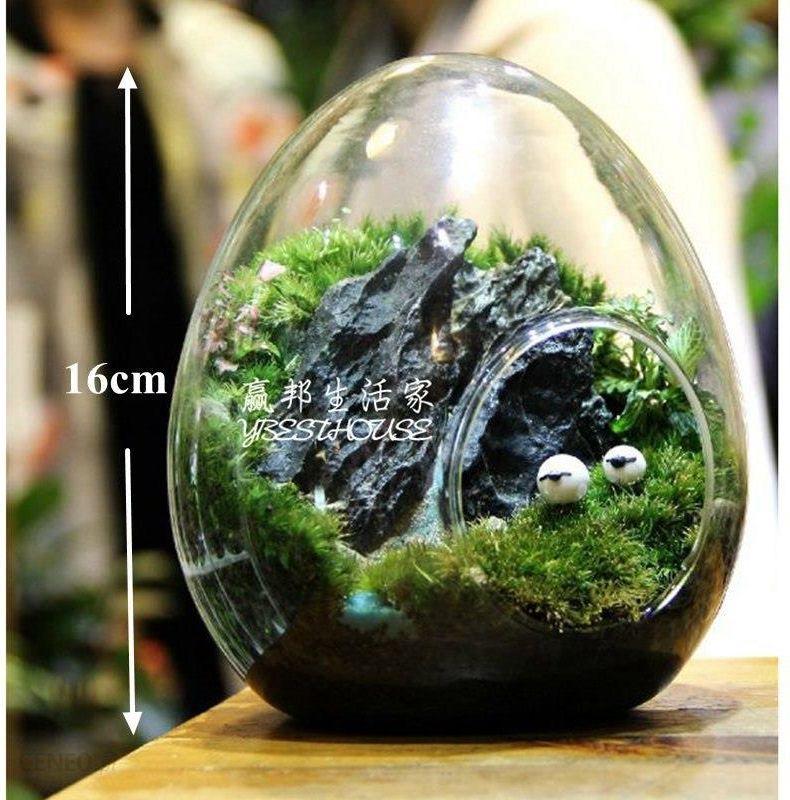 Aliexpress Dctal Jaj Terrarium śliczne Szkło Garnki Powietrza Roślin