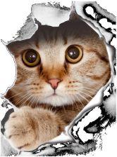 Aliexpress Koty 3d Naklejki Na ściany Naklejki Wc łazienka ściana