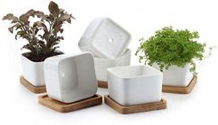 Amazon T4u Ceramiczne Doniczki Do Sukulentów Bambusowa Podstawka X Small Ceneopl