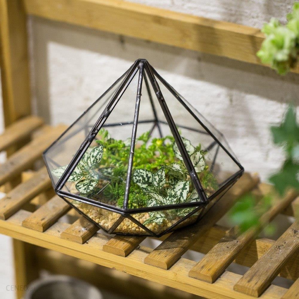 Aliexpress Wyświetlacz Blat Diament Geometria Terrarium Szklane Balkon Ogród Sadzarka Dla Sukulenty Rośliny Dekoracyjne Doniczka Z Pokrywą Ceneopl
