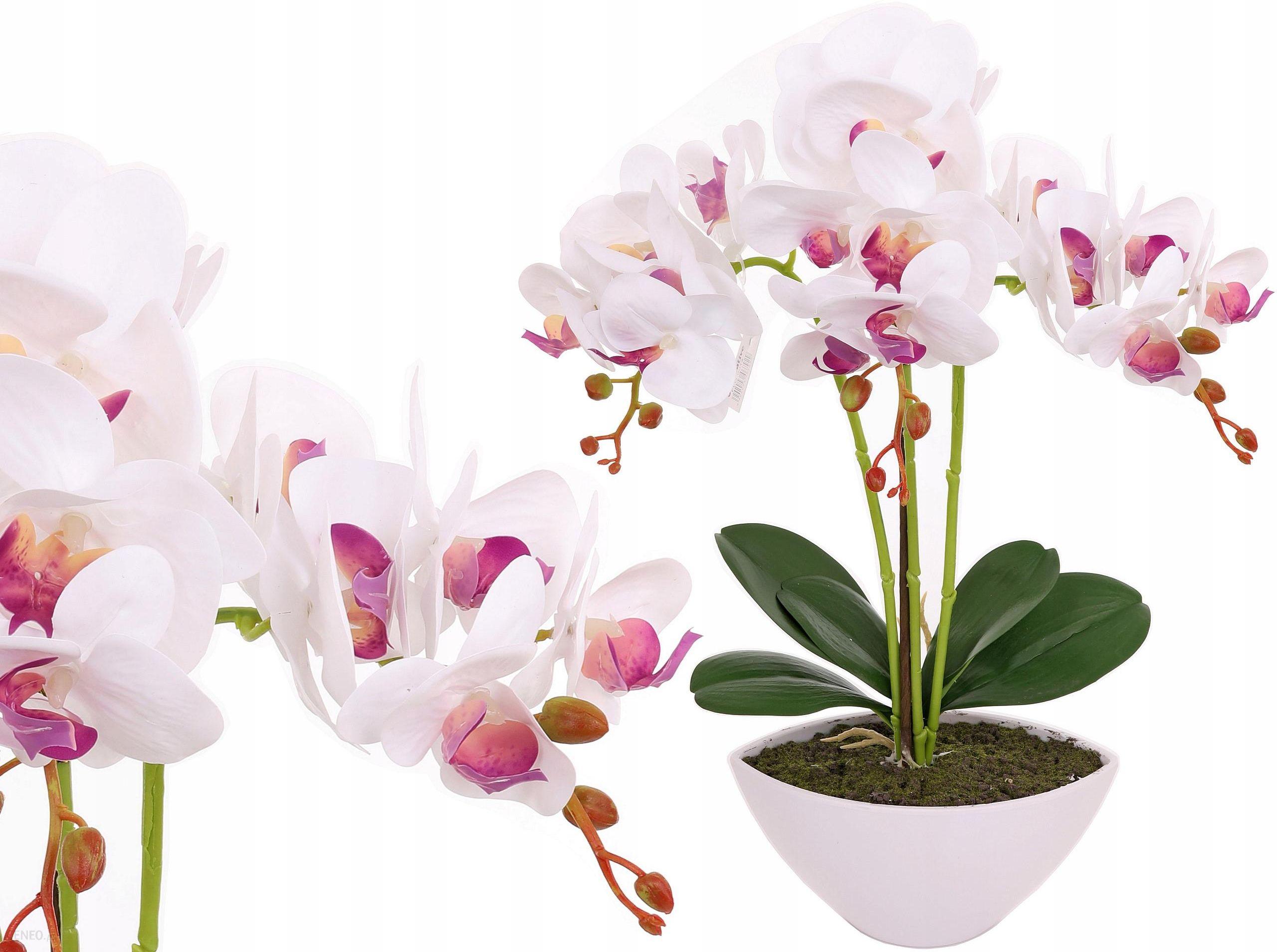 Storczyk W Doniczce Jak Zywy Sztuczny Kwiat 3 Pedy Ceny I Opinie Ceneo Pl